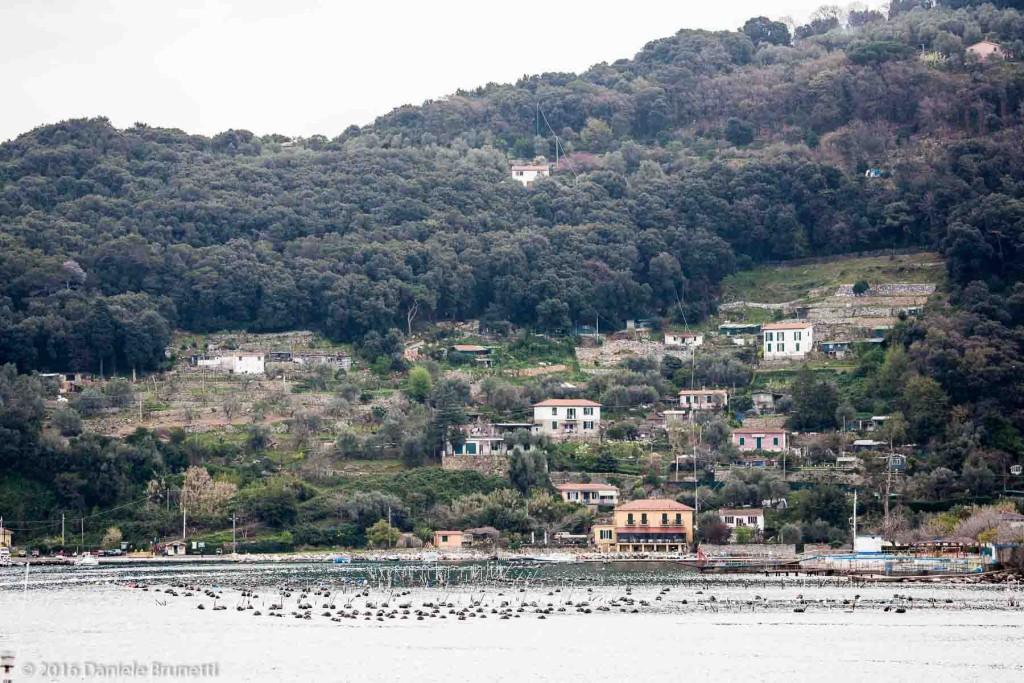 Isola Palmaria - Portovenere (SP)